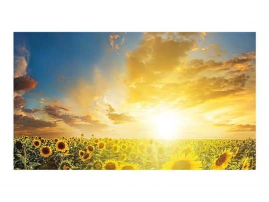 A rising sun over sunflower fields to demonstrate the impact of Circadian Lighting Visual Timing Light